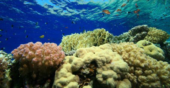 acidificazione-oceani