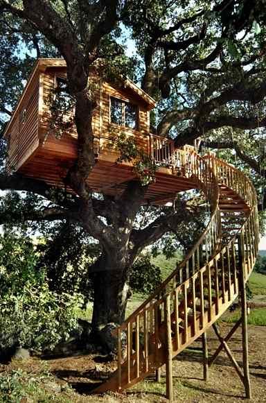 case su albero viterbo