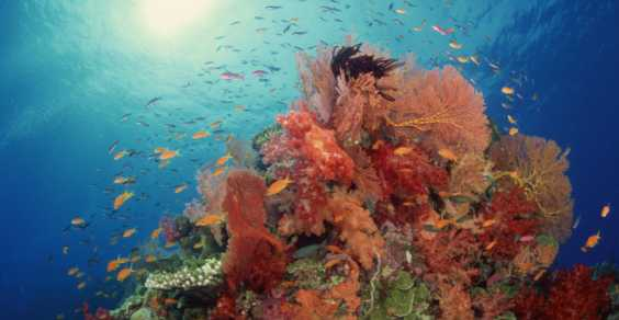 coralli deepwater