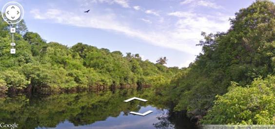 foresta amaz1