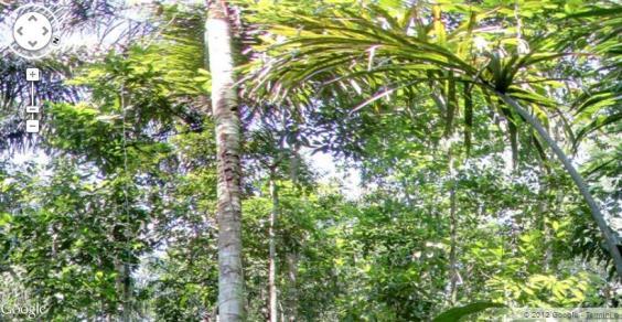 foresta amaz2