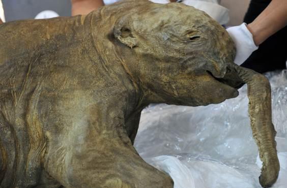 baby mammut2