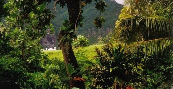 foresta malai