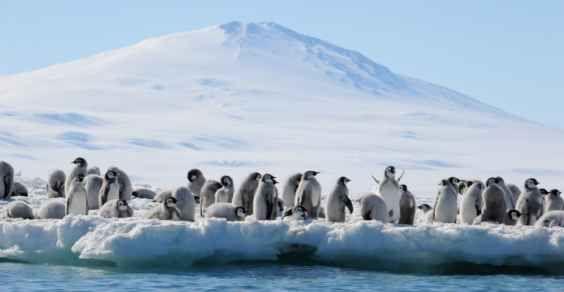 pinguini imperatore