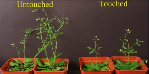 plants 500