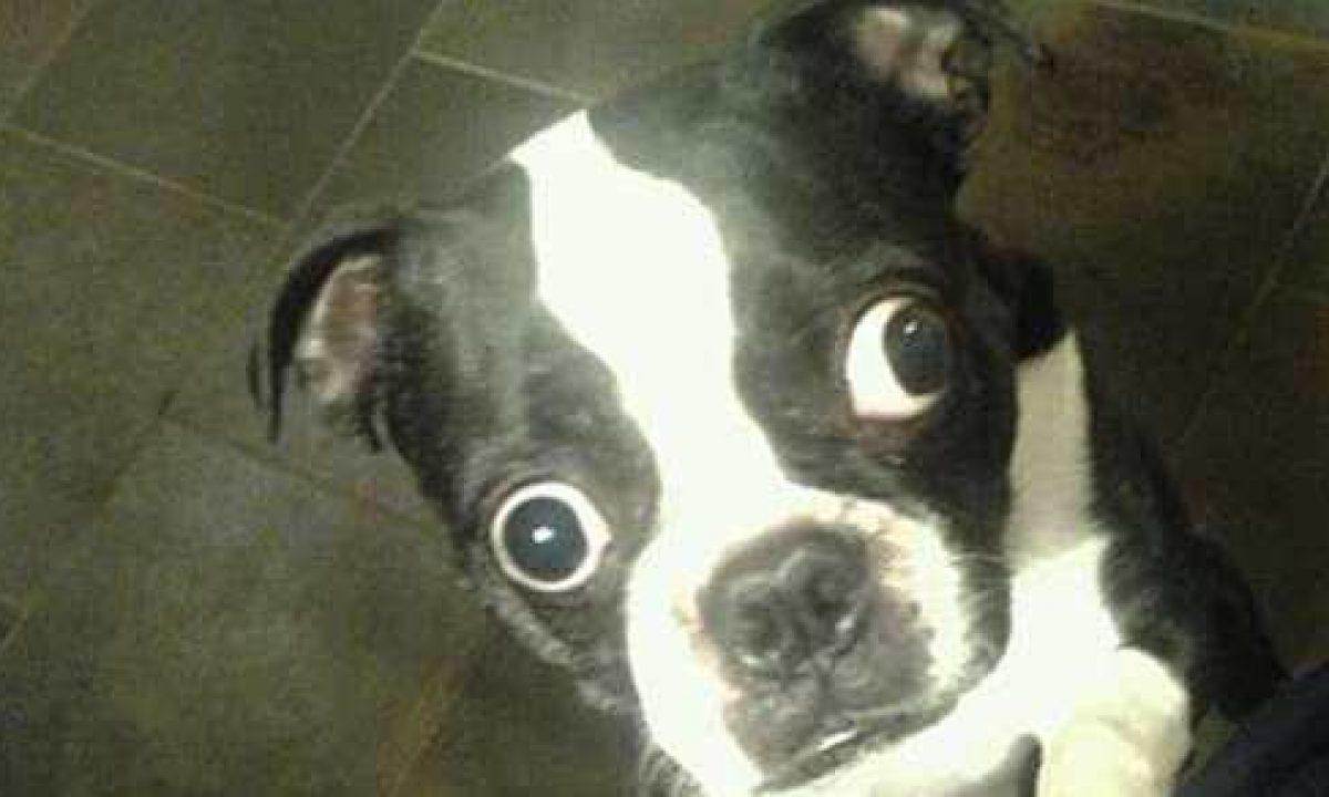Il cane con gli occhi più grandi del mondo - greenMe