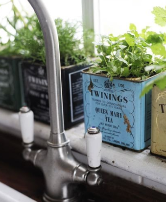 RRR Recycle tea tea tins lattine the riciclo DIY pinte vasi per piantine erbe in cucina herbs in the kitchen