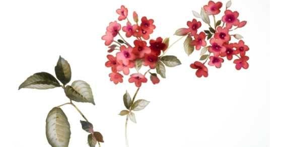 arte botanica