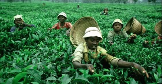 bambini sfruttamento lavoro