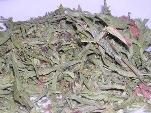 Foglie di stevia essiccate