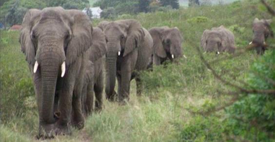 lawrence anthony elefanti