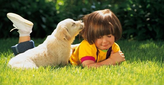 cane bimba pianto