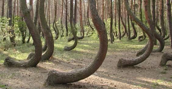 foresta curva