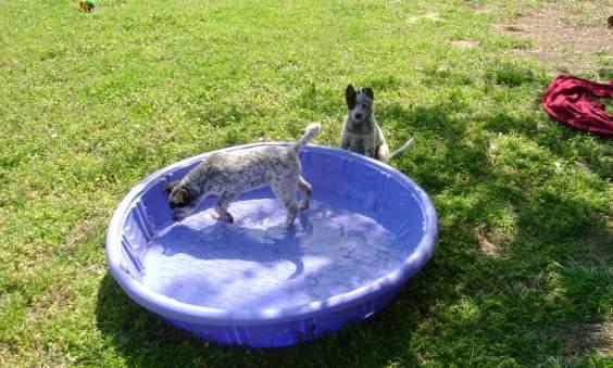 riciclo piscina cani