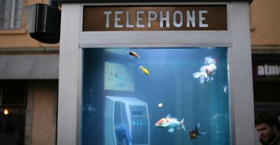 aquarium phone 1