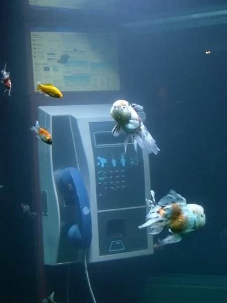 aquarium phone 3