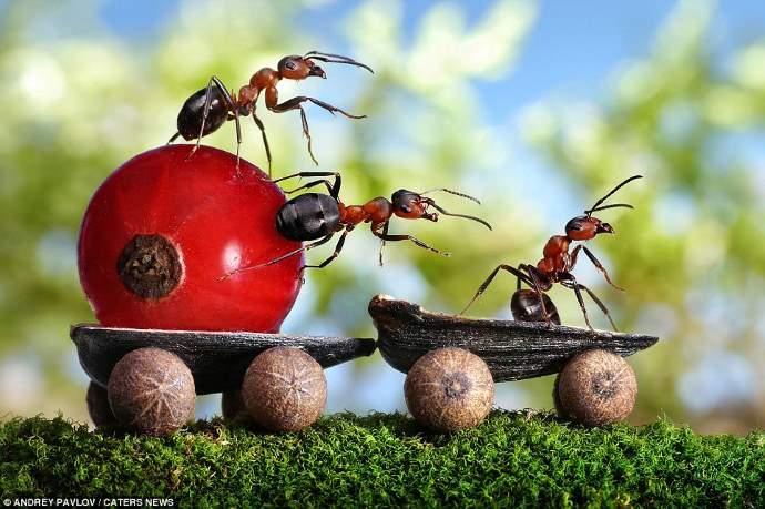formiche pavlov