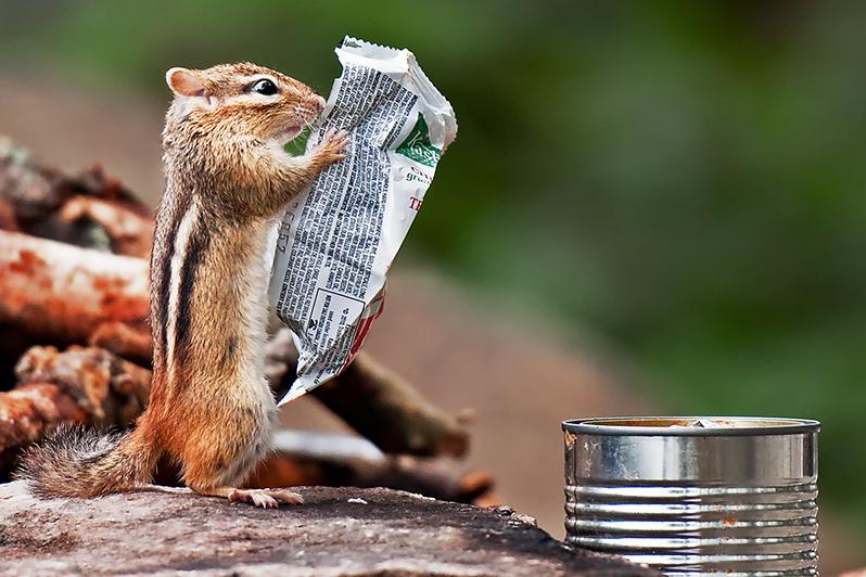 scoiattolo colazione