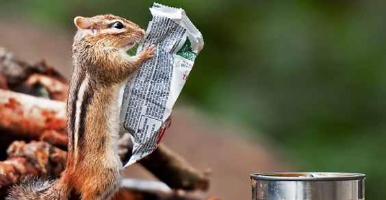 scoiattolo colazione main