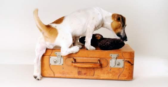 viaggiare cani