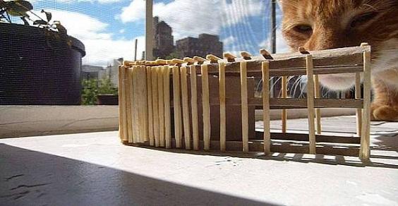 casa gatti disabili