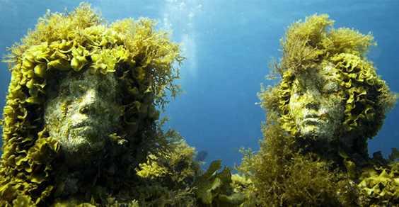 coral taylor