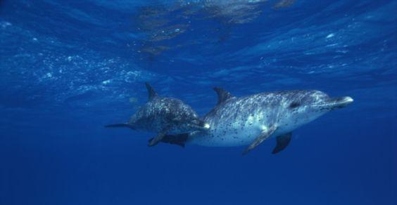 delfini sonno