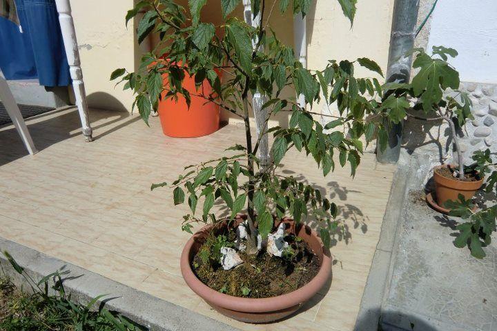 seminare alberi fusto