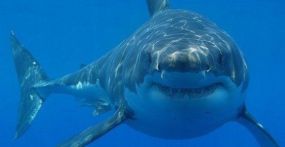 squalo estinzione