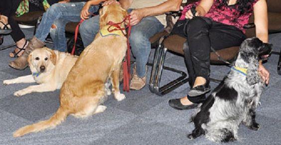 Pet-Coaching 2