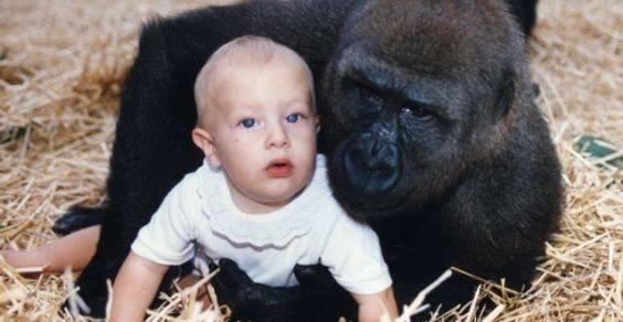 Tansy-Aspinall-con-gorila hm