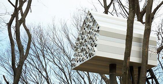 casa sullalbero per uccelli