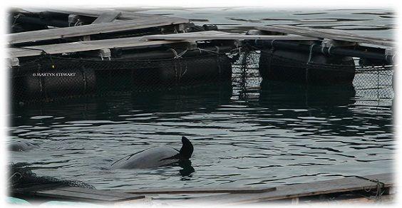 delfino malato
