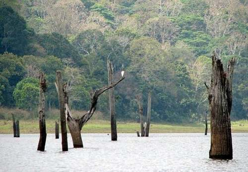 foreste 3 periyar lake