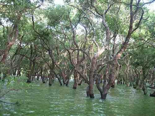 foreste 7 cambogia