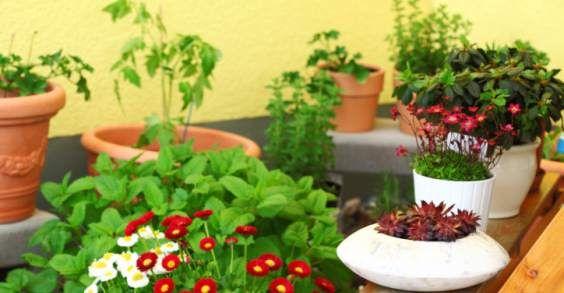piante ornamentali commestibili