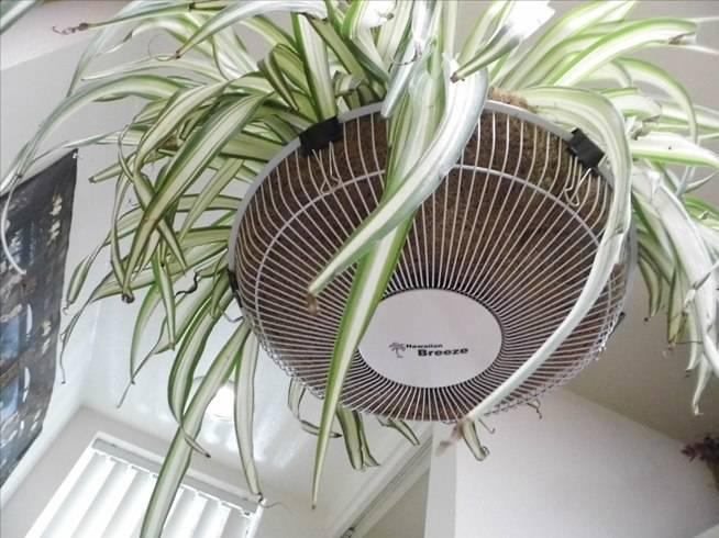 riciclo ventilatore vasi