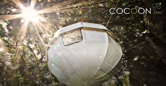 cocoon tree