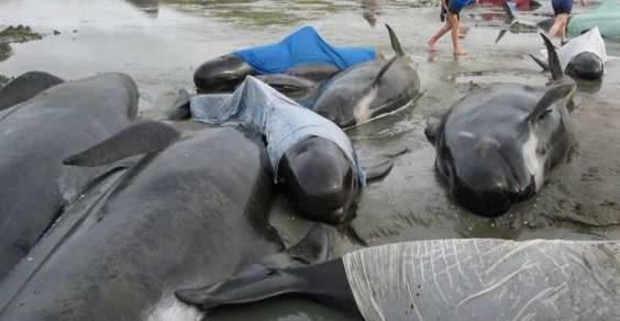 moria balene