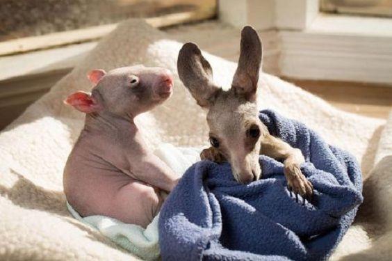 trio marsupiali.jpg 2