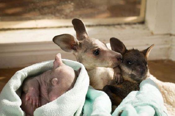trio marsupiali.jpg 4
