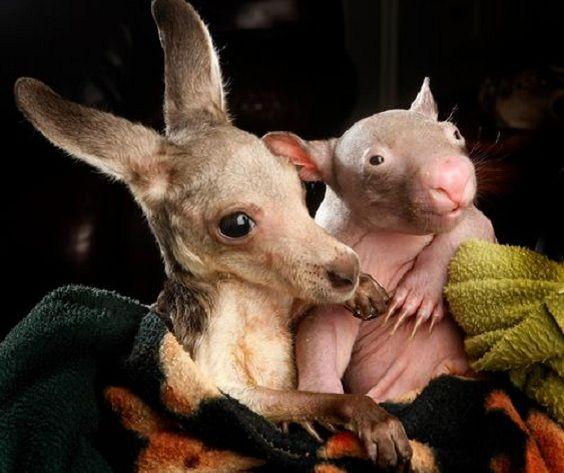 trio marsupiali.jpg 5