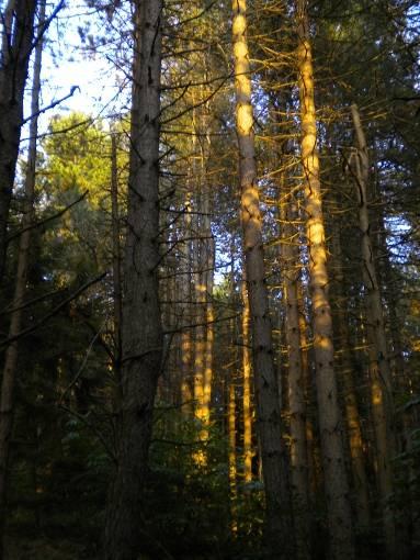 un bosco di conifere sullAppennino parmense