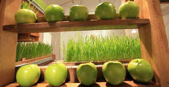 wheat grass machine