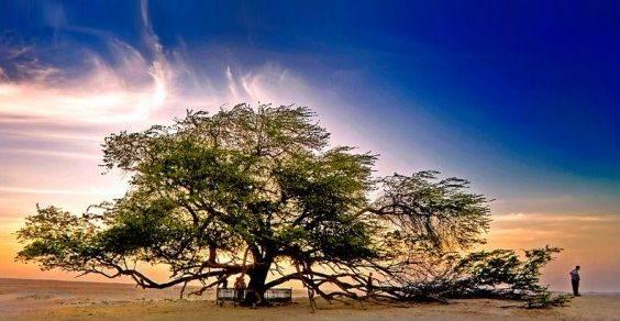 alberi strani