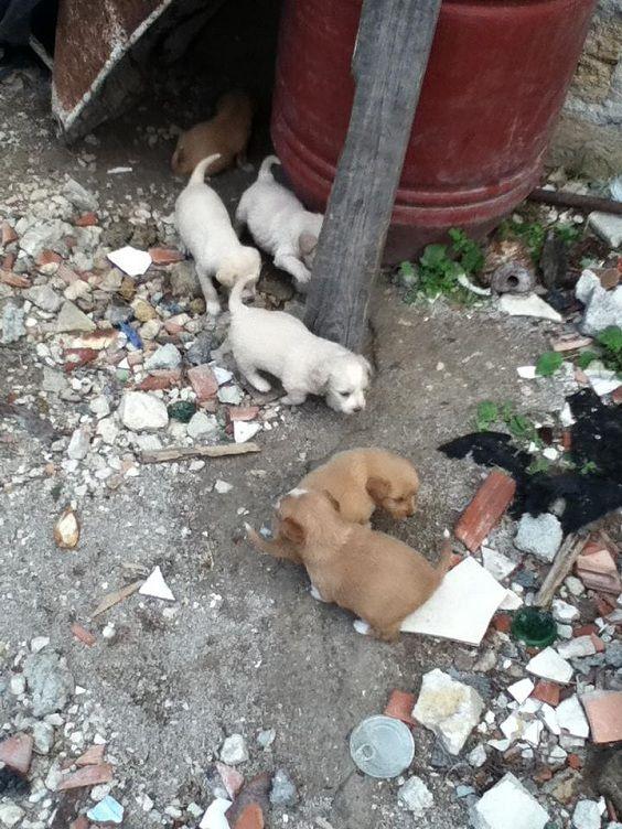 cani bambino 2