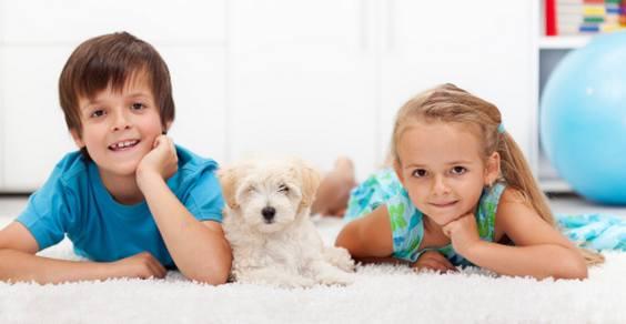 obesita infantile cane