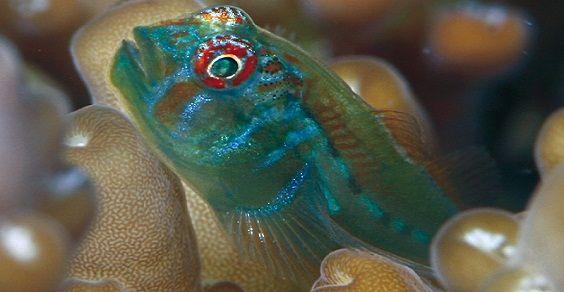 pescibodyguard2