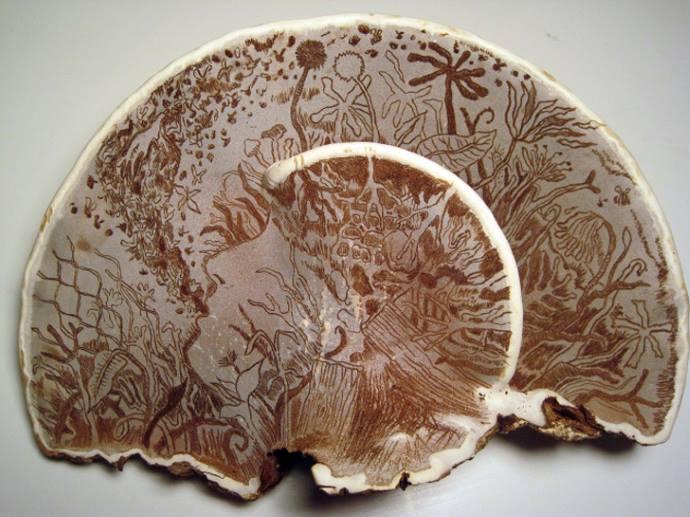 dipinti funghi