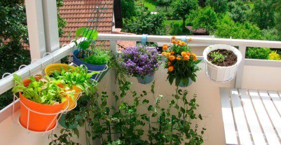 erbe aromatiche balcone